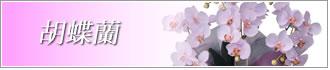 胡蝶蘭 造花 光触媒