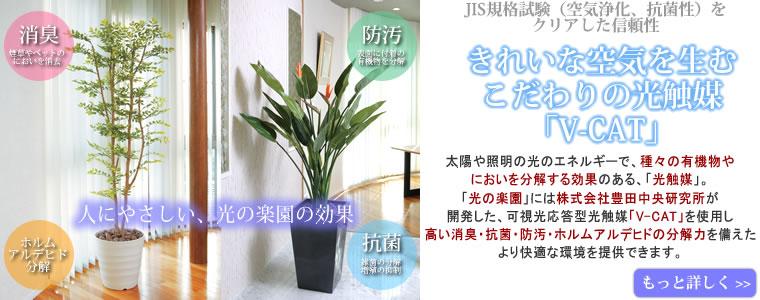 光触媒 高級造花 人工観葉植物
